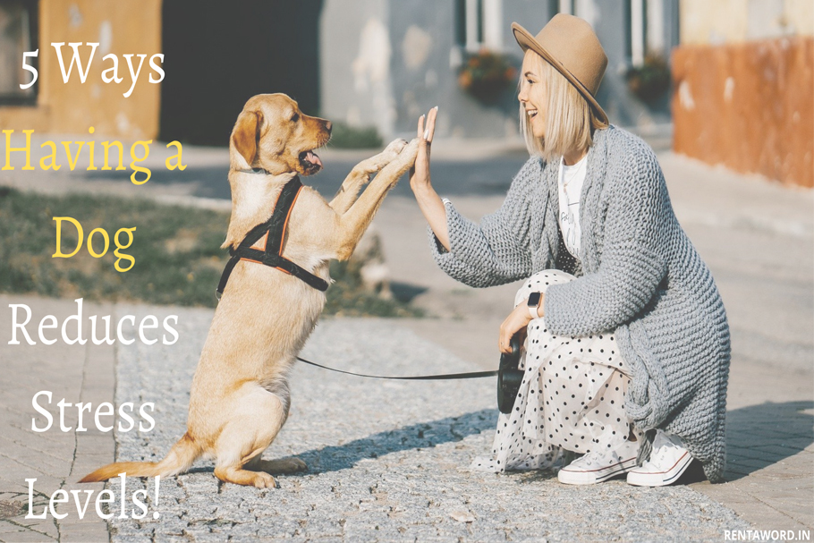 how-a-dog-reduces-stress-levels